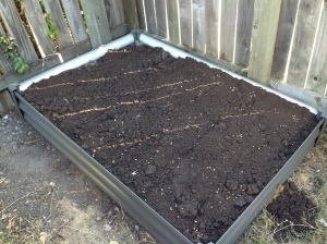 My new garden bed, planted with wheat, rye and barley